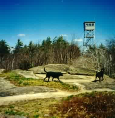Hike nh pawtuckaway state park doggie adventure dont worry well keep an eye on them publicscrutiny Gallery